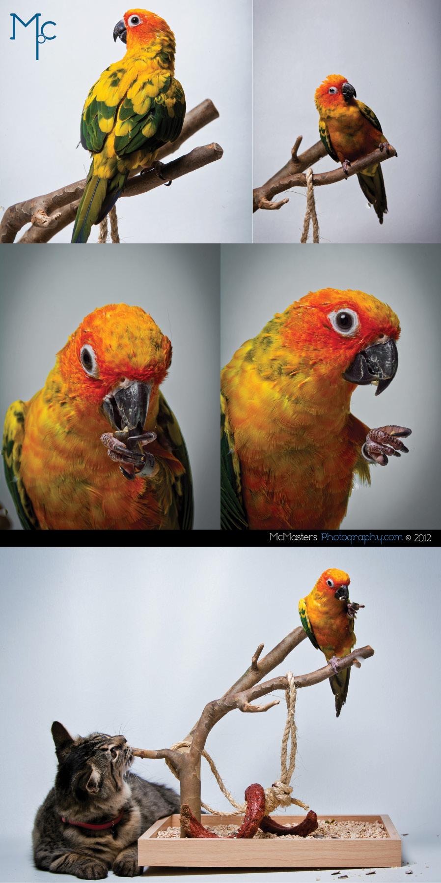 Philadelphia pet photographer