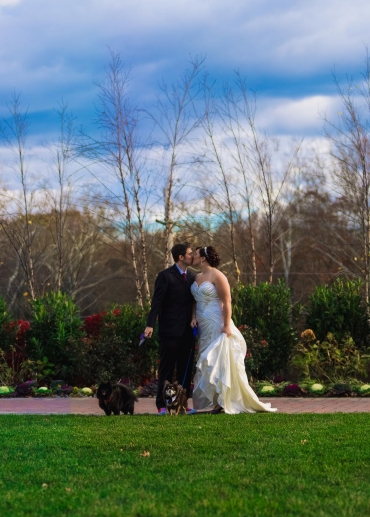 Bride and groom with dogs photo